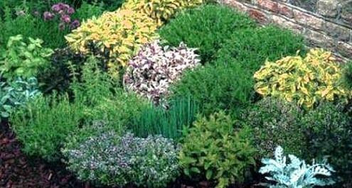 Come coltivare le erbe aromatiche in vaso dojo garden - Erbe aromatiche in casa ...