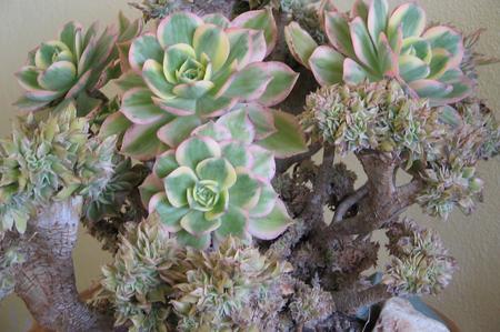 Come curare le piante grasse colpite da funghi - Dojo Garden
