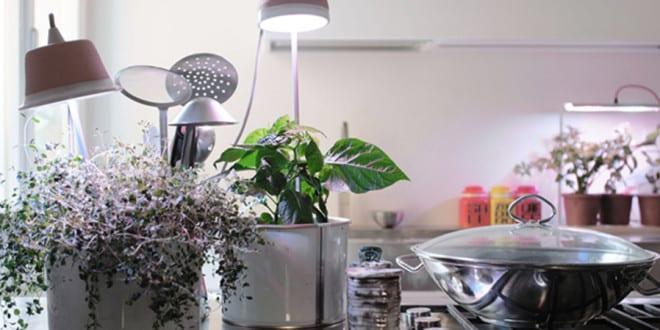 Come coltivare indoor: 10 consigli utili