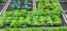 come coltivare gli ortaggi