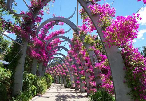Le migliori piante rampicanti dojo garden for Piante rampicanti