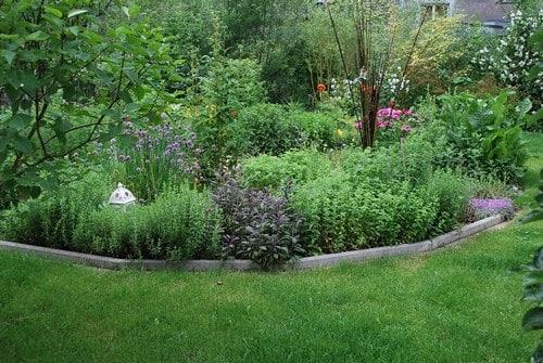 Cura delle piante aromatiche errori da evitare dojo garden for Aiuole profumate